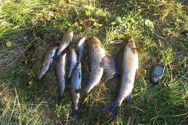 рыбалка в литках
